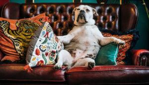 Как правильно общаться с собакой