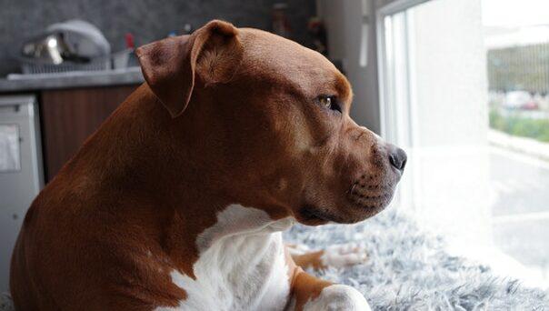 Лай на прохожих - как отучить собаку лаять на прохожих