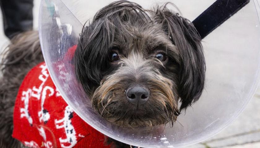 кровотечение у собаки