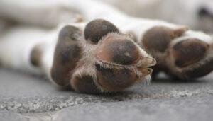 как защитить лапы собаки от реагентов