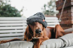 Как выглядит здоровая собака